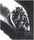 Не оплавленный волос Так выглядят волоски после традиционной стрижки - волосы остаются не оплавленными. Это означает, что концы открыты. Когда волосы не защищены от разрушающих воздействий, они теряют блеск, объем и силу
